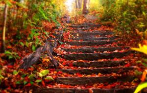 Fall Gardening – A Quieter Time In The Garden?